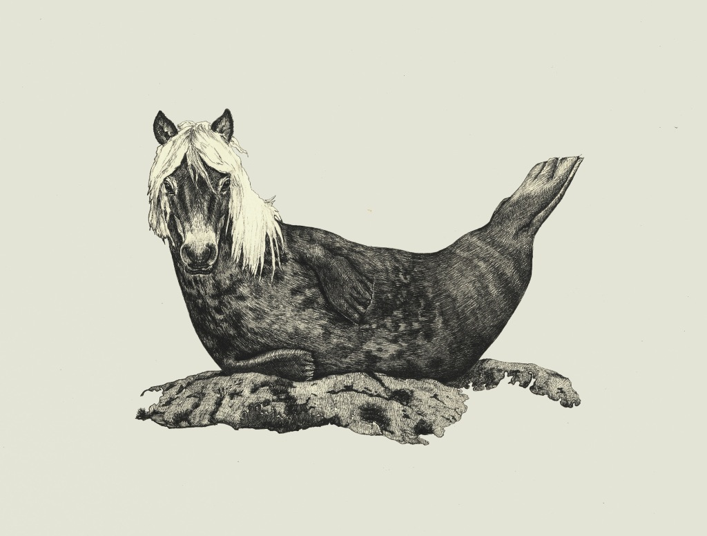 ShetlandSeal - Amie Bolissian - Ink on Paper - 2015